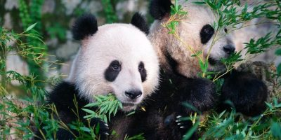 Cheap flights from PHL Philly to PVG Shanghai, China, Philly Flight List, Moonfish