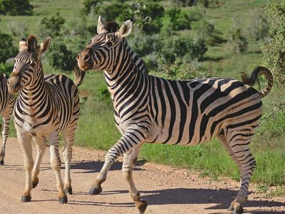 Cheap flights from PHL to JNB Johannesburg South Africa